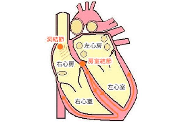 刺激 系 心臓 伝導